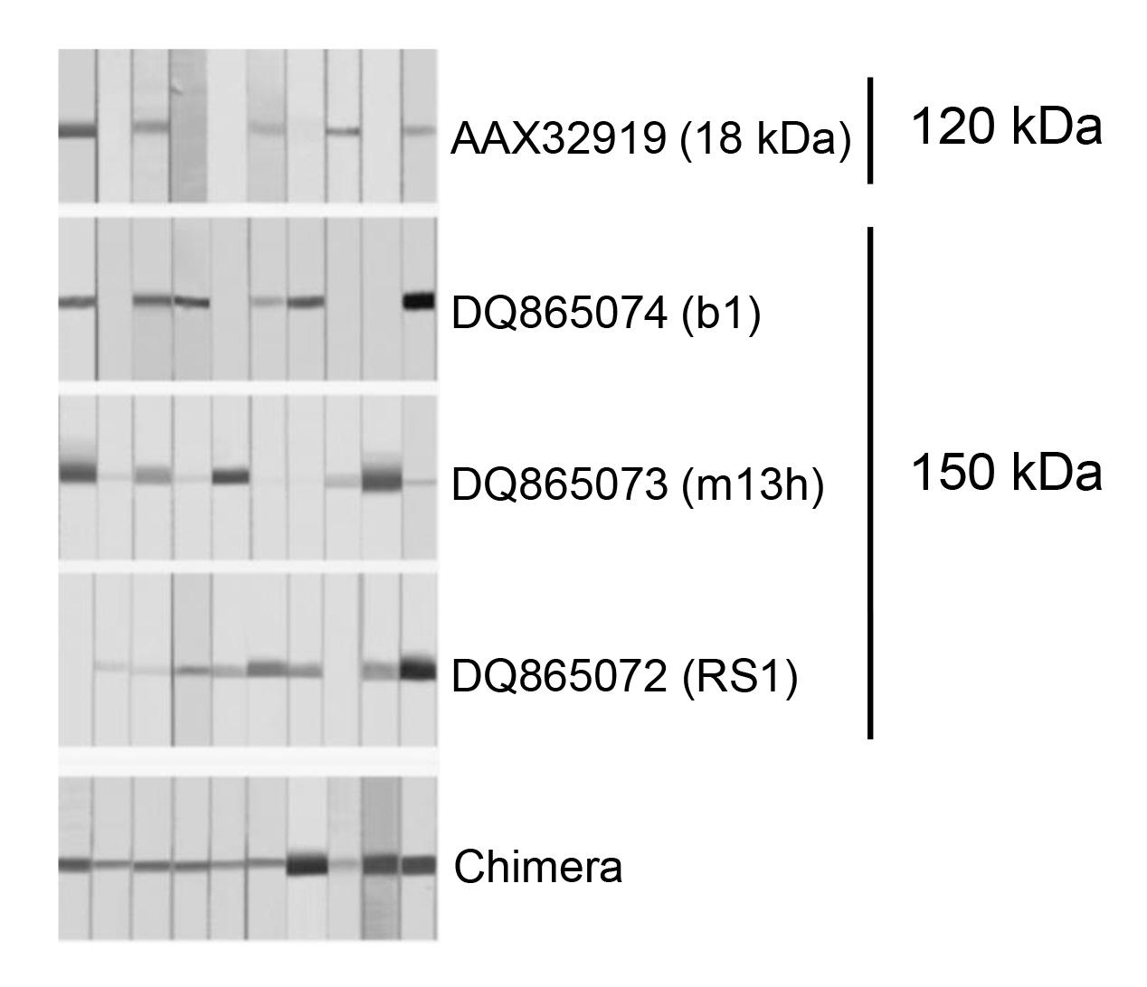 Advances in Serological Diagnosis of <i xmlns=